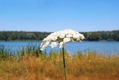 Απολαύστε το καλοκαίρι στη λίμνη Στοκ Εικόνα