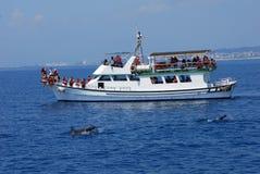 Απολαύστε tun φαλαινών στοκ φωτογραφίες