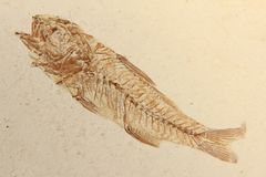 Απολιθωμένα ψάρια Στοκ Φωτογραφίες