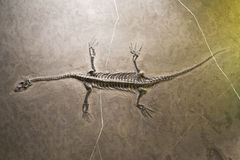 απολιθώματα δεινοσαύρω&n