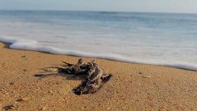 Απολύτως εξεντερισμένο seagull σε μια αμμώδη παραλία φιλμ μικρού μήκους