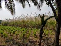 Απολύτως πράσινη γεωργική γη με τα δέντρα στοκ εικόνες