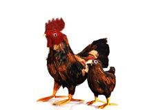 απομίμηση κοτόπουλου Στοκ φωτογραφία με δικαίωμα ελεύθερης χρήσης