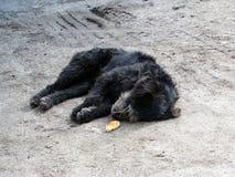 Απομακρυνθείτε κακομεταχειρισμένο σκυλί Στοκ εικόνες με δικαίωμα ελεύθερης χρήσης
