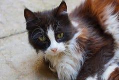 Απομακρυνθείτε μια διάστικτη γάτα στο πεζοδρόμιο στην οδό Στοκ Εικόνες