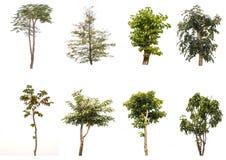 Απομονωμένα δέντρα στο άσπρο υπόβαθρο, η συλλογή των δέντρων Στοκ φωτογραφίες με δικαίωμα ελεύθερης χρήσης