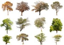 Απομονωμένα δέντρα στο άσπρο υπόβαθρο, η συλλογή των δέντρων Στοκ Φωτογραφία