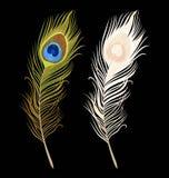 Απομονωμένα διάνυσμα peacock φτερά ελεύθερη απεικόνιση δικαιώματος