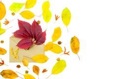 Απομονωμένα ζωηρόχρωμα φύλλα φθινοπώρου με το φάκελο στο άσπρο υπόβαθρο Στοκ φωτογραφίες με δικαίωμα ελεύθερης χρήσης