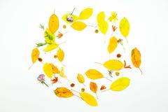 Απομονωμένα ζωηρόχρωμα φύλλα φθινοπώρου στο άσπρο υπόβαθρο Στοκ Εικόνα