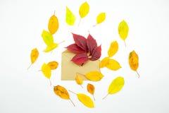 Απομονωμένα ζωηρόχρωμα φύλλα φθινοπώρου στο άσπρο υπόβαθρο Στοκ φωτογραφία με δικαίωμα ελεύθερης χρήσης