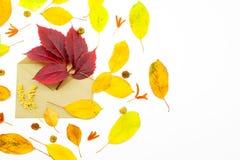 Απομονωμένα ζωηρόχρωμα φύλλα φθινοπώρου στο άσπρο υπόβαθρο Στοκ Φωτογραφίες