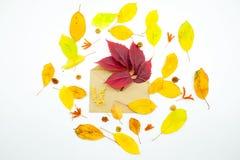 Απομονωμένα ζωηρόχρωμα φύλλα φθινοπώρου στο άσπρο υπόβαθρο Στοκ Εικόνες