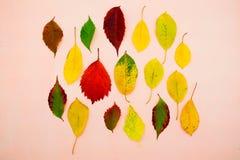 Απομονωμένα ζωηρόχρωμα φύλλα φθινοπώρου στο μπεζ υπόβαθρο Στοκ εικόνες με δικαίωμα ελεύθερης χρήσης
