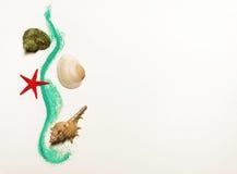 απομονωμένα κοχύλια θάλα&s Στοκ Εικόνες