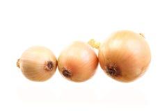 απομονωμένα κρεμμύδια Στοκ Φωτογραφίες