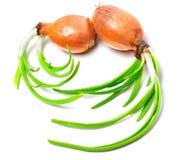 απομονωμένα κρεμμύδια που βλαστάνουν το λευκό Στοκ φωτογραφία με δικαίωμα ελεύθερης χρήσης