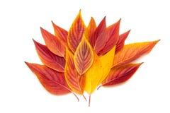 Απομονωμένα κόκκινα φύλλα Στοκ Εικόνες
