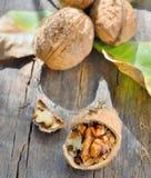 απομονωμένα ξύλα καρυδιά&sigma Στοκ φωτογραφία με δικαίωμα ελεύθερης χρήσης