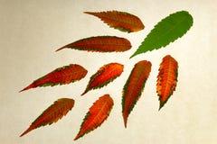 Απομονωμένα πολύχρωμα φύλλα Στοκ φωτογραφία με δικαίωμα ελεύθερης χρήσης
