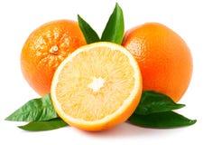 απομονωμένα πορτοκάλια δ Στοκ Εικόνα