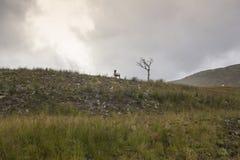 Απομονωμένα πρόβατα σε έναν λόφο στοκ εικόνες