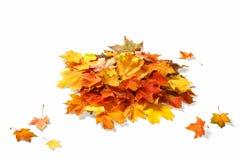 Απομονωμένα φύλλα φθινοπώρου στο λευκό Στοκ Φωτογραφίες