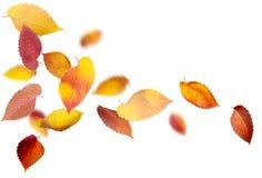 Απομονωμένα φύλλα φθινοπώρου Στοκ φωτογραφία με δικαίωμα ελεύθερης χρήσης
