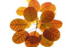 απομονωμένα φύλλα Στοκ φωτογραφία με δικαίωμα ελεύθερης χρήσης