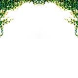 απομονωμένα φύλλα κισσών Στοκ φωτογραφία με δικαίωμα ελεύθερης χρήσης