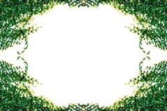 απομονωμένα φύλλα κισσών Στοκ Εικόνες