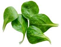 Απομονωμένα φύλλα σαλάτας σπανακιού Στοκ φωτογραφία με δικαίωμα ελεύθερης χρήσης