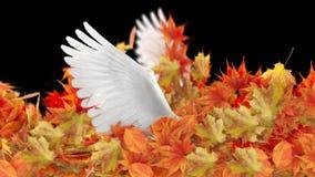 Απομονωμένα φύλλα φθινοπώρου και φτερά περιστεριών στο μαύρο εννοιολογικό υπόβαθρο Στοκ εικόνες με δικαίωμα ελεύθερης χρήσης