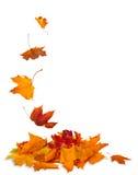 Απομονωμένα φύλλα φθινοπώρου που απομονώνονται στο άσπρο υπόβαθρο Στοκ φωτογραφία με δικαίωμα ελεύθερης χρήσης