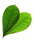 απομονωμένα φύλλα Στοκ Φωτογραφία