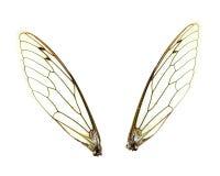 απομονωμένα cicada φτερά Στοκ Εικόνα
