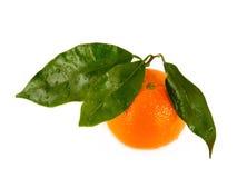 απομονωμένα tangerines φύλλων Στοκ φωτογραφία με δικαίωμα ελεύθερης χρήσης