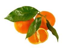 απομονωμένα tangerines φύλλων Στοκ εικόνες με δικαίωμα ελεύθερης χρήσης
