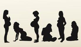 Απομονωμένες σκιαγραφίες των εγκύων γυναικών, διάνυσμα Στοκ Εικόνες
