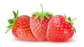 απομονωμένες φράουλες τρία στοκ φωτογραφία με δικαίωμα ελεύθερης χρήσης