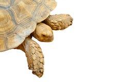 απομονωμένη κινηματογράφηση σε πρώτο πλάνο χελώνα Στοκ φωτογραφία με δικαίωμα ελεύθερης χρήσης