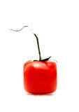 απομονωμένη ντομάτα Στοκ Εικόνα