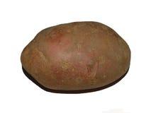 απομονωμένη πατάτα Στοκ Φωτογραφία