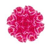 Απομονωμένη ρόδινη διακοσμητική διακόσμηση λουλουδιών Στοκ Εικόνες
