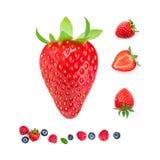 απομονωμένη φράουλα Φρέσκα ώριμα ολόκληρα φρούτα φραουλών που απομονώνονται Στοκ Εικόνες