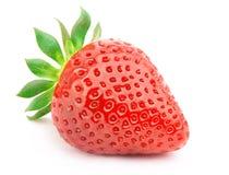 απομονωμένη φράουλα φύλλ&ome Στοκ εικόνες με δικαίωμα ελεύθερης χρήσης