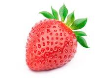 απομονωμένη φράουλα φύλλ&ome Στοκ Εικόνες