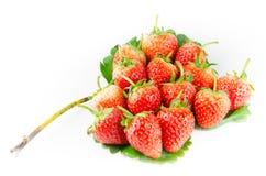 απομονωμένη φράουλα Στοκ Φωτογραφία