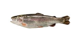 απομονωμένη ψάρια πέστροφα στοκ φωτογραφίες με δικαίωμα ελεύθερης χρήσης