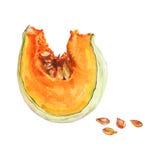 Απομονωμένη Watercolor φέτα της κολοκύθας και των σπόρων Συρμένο χέρι ώριμο λαχανικό Στοκ εικόνα με δικαίωμα ελεύθερης χρήσης